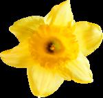 RR_SpringFling_Element (87).png