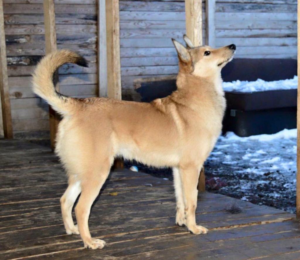 Лис собака из догпорта