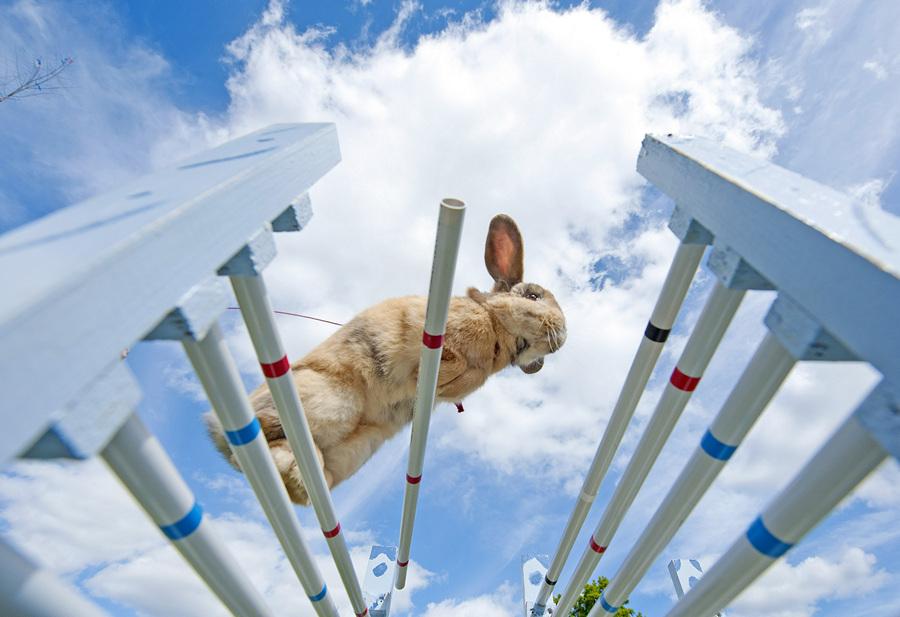 Кроличьи прыжки