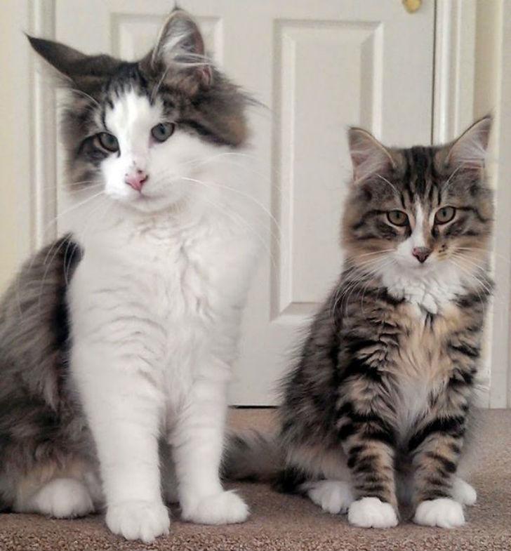 Клайв (справа) со своим братом.
