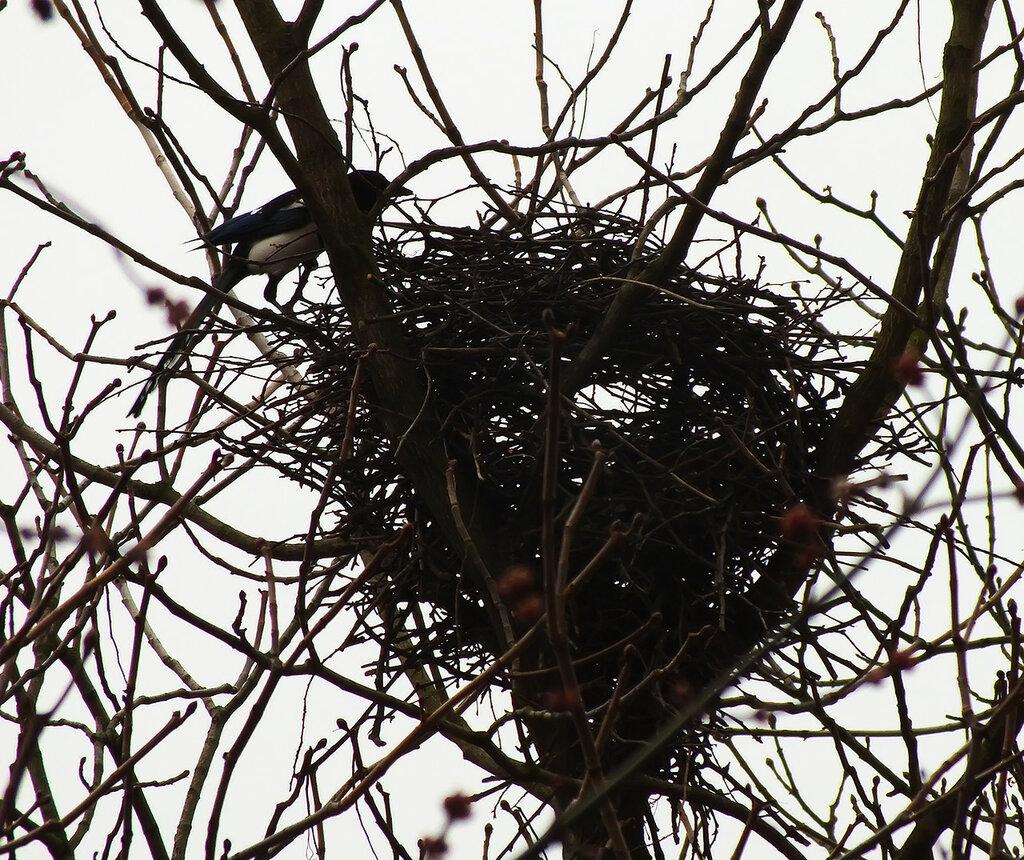 строим гнездо