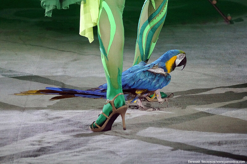 Зима. Эмоци и. Попугаи Е.Бараненко. 05.02.16.06..jpg