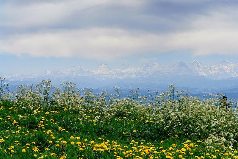 цветы и небо