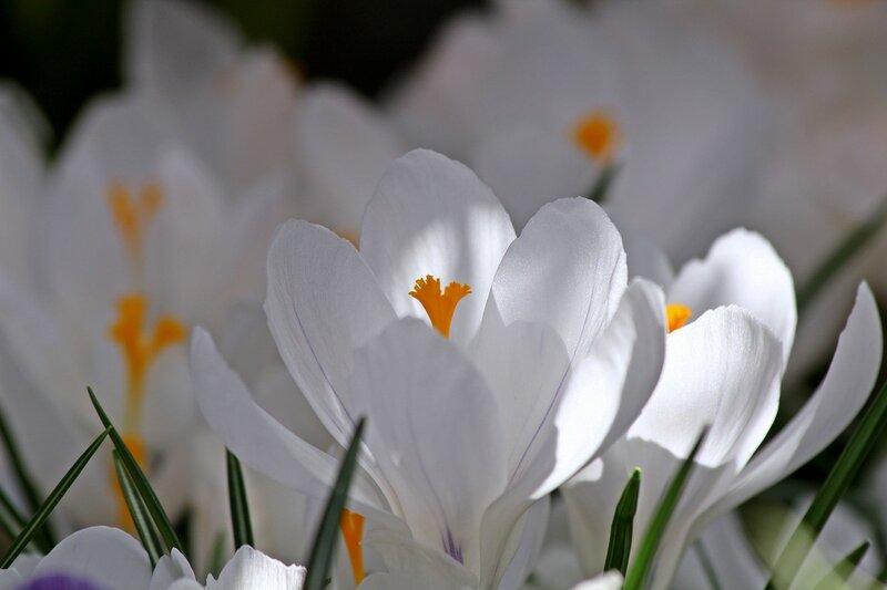 Фонарики Весны