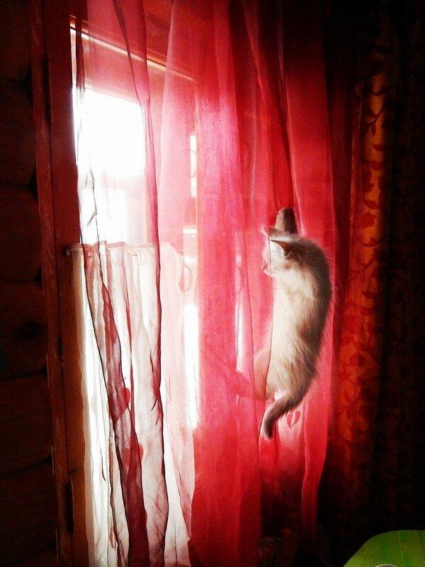 Что за окном ?
