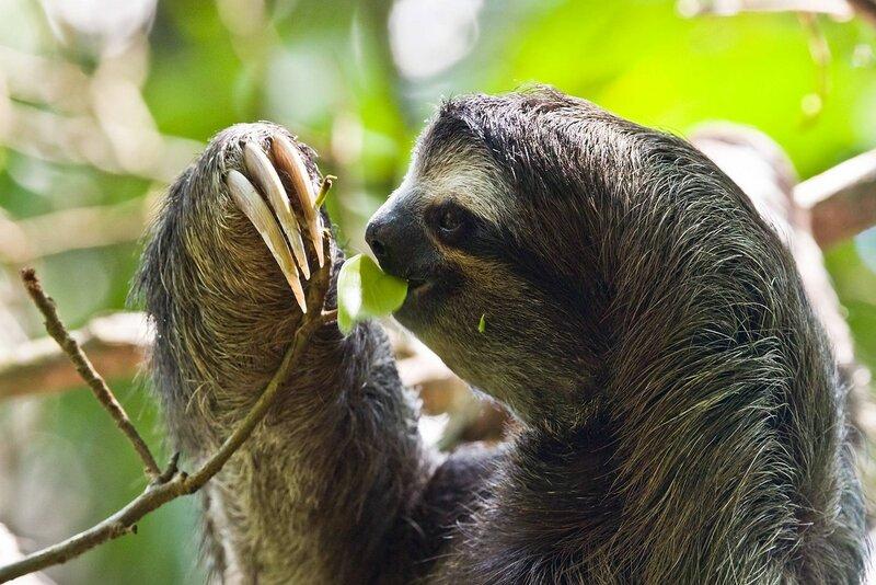 Ленивец 1.jpg