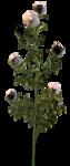 цветы (89).png