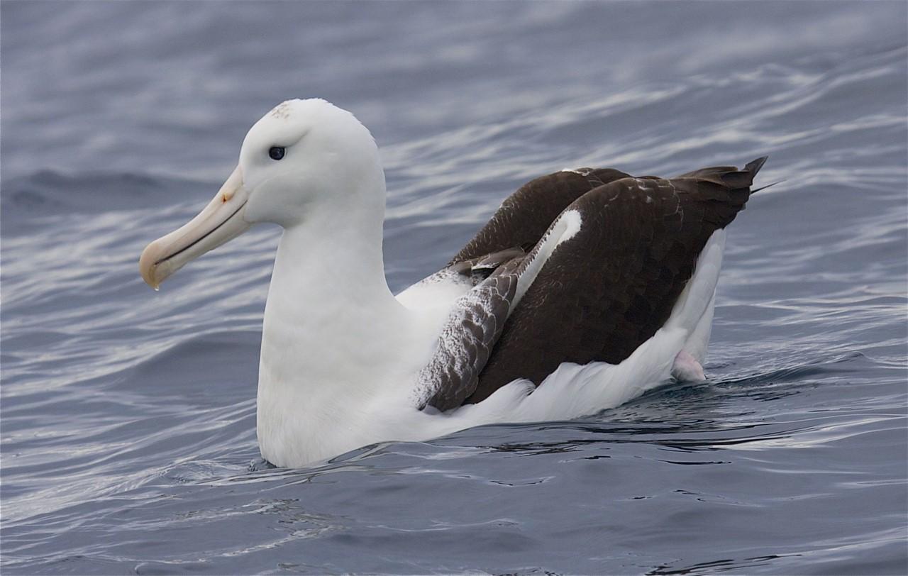 человек фото птицы альбатрос комплексе представлены