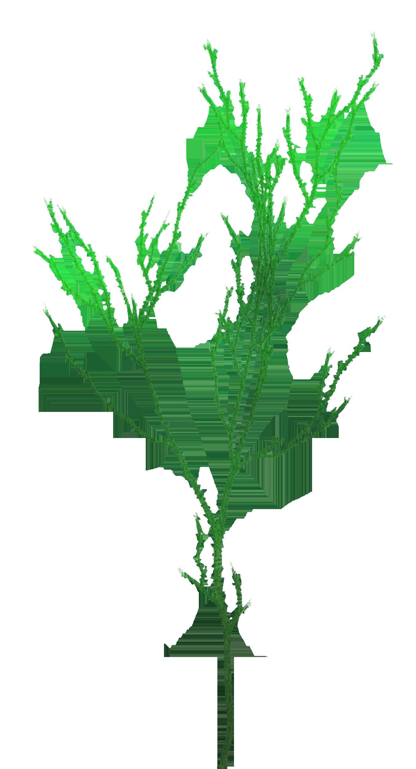водоросли клипарт: