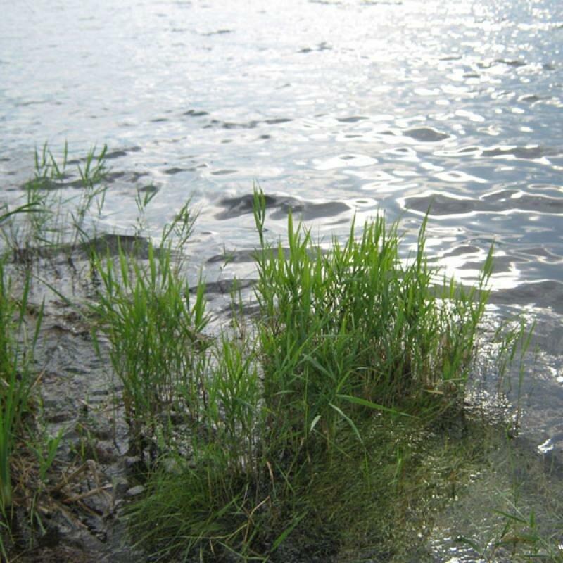 Вода прозрачная (16.05.2013)