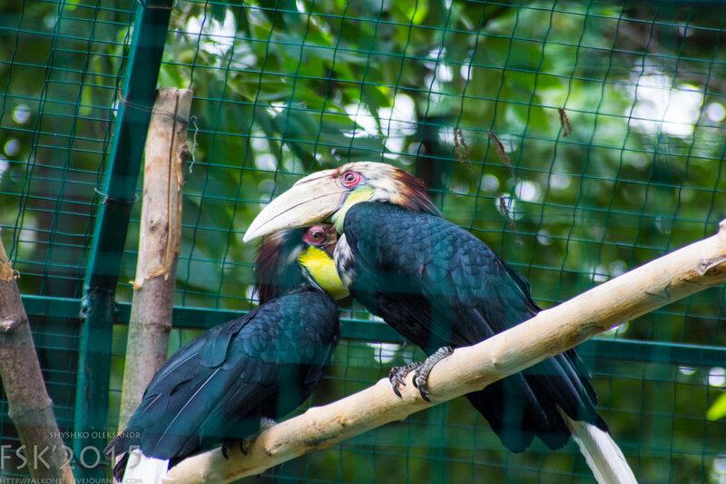 kyiv_zoo-63.jpg
