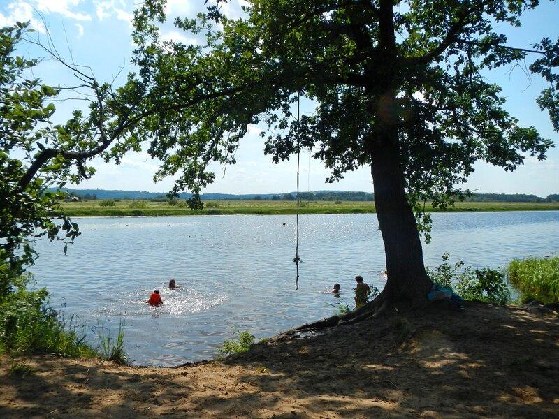 Дуб с тарзанкой на берегу Чёрного озера