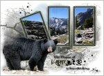 Медведь.jpg