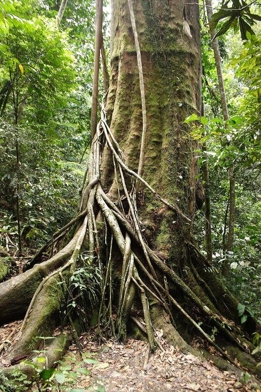 Первичный экваториальный лес
