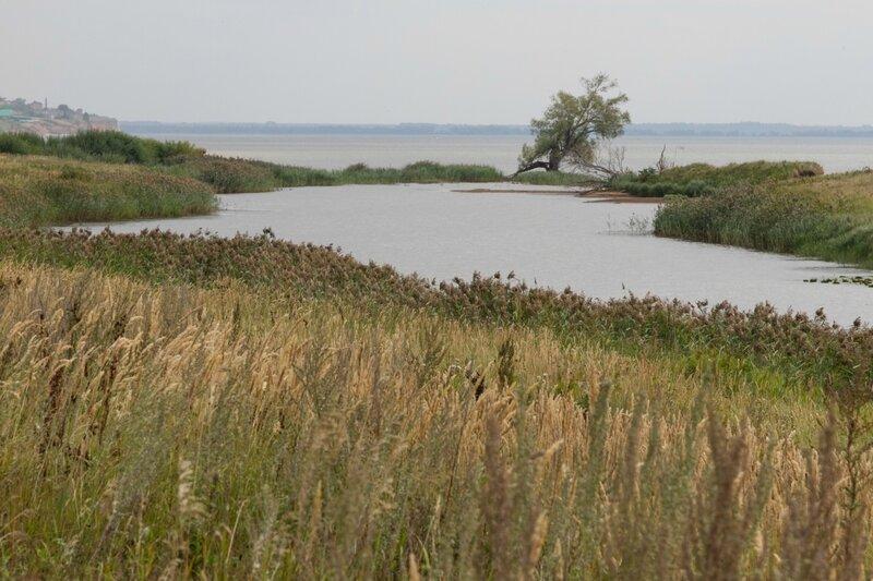 Берег Куйбышевского водохранилища