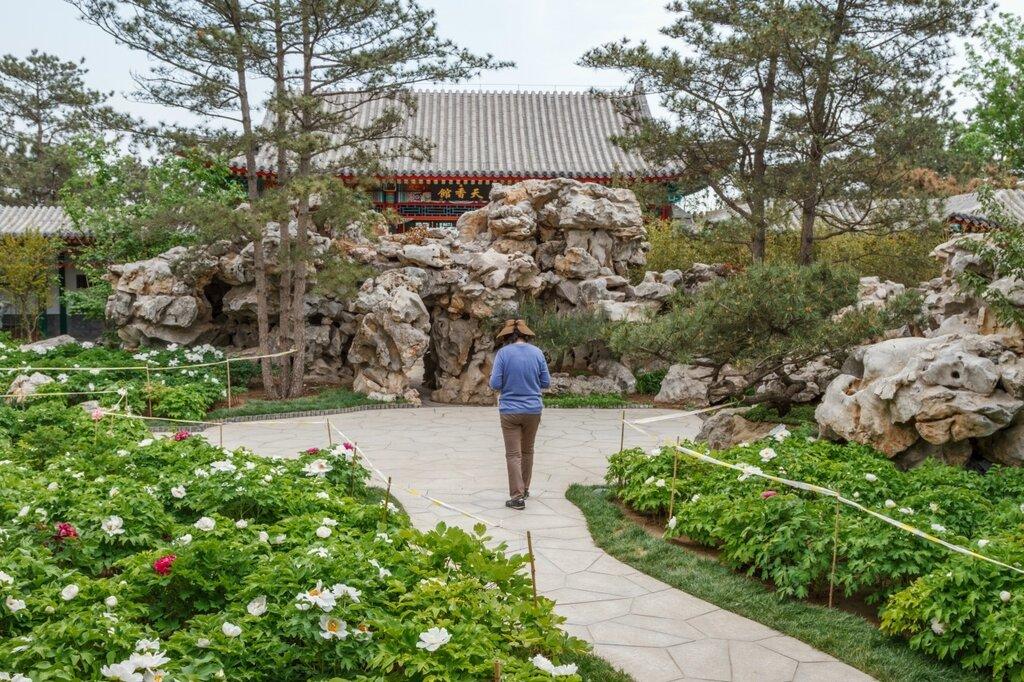 Сад пионов в пекинском саду, парк-выставка садов