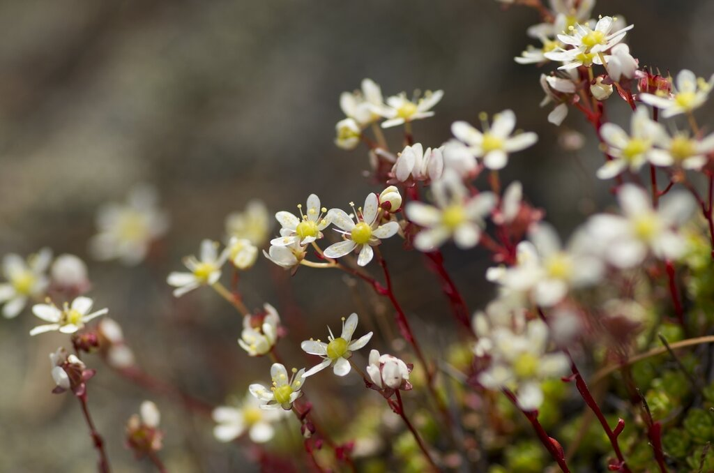 Цветочки для Настеньки