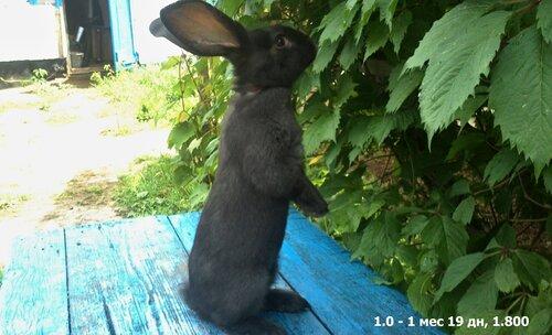 Крольчата. - Страница 5 0_aae12_1bec2494_L