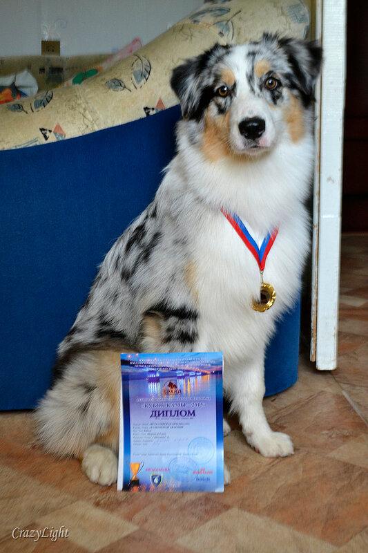 Выставочные успехи наших собак - 5 - Страница 28 0_1441eb_2827bdcd_XL