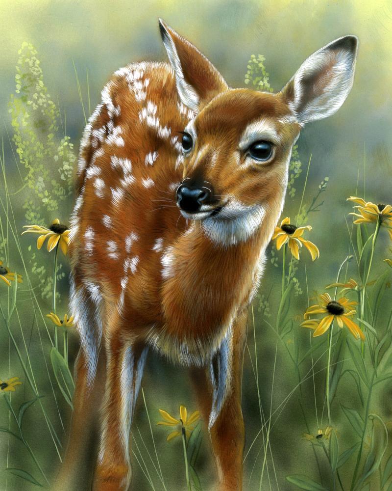 Rosemary-Millette.jpg