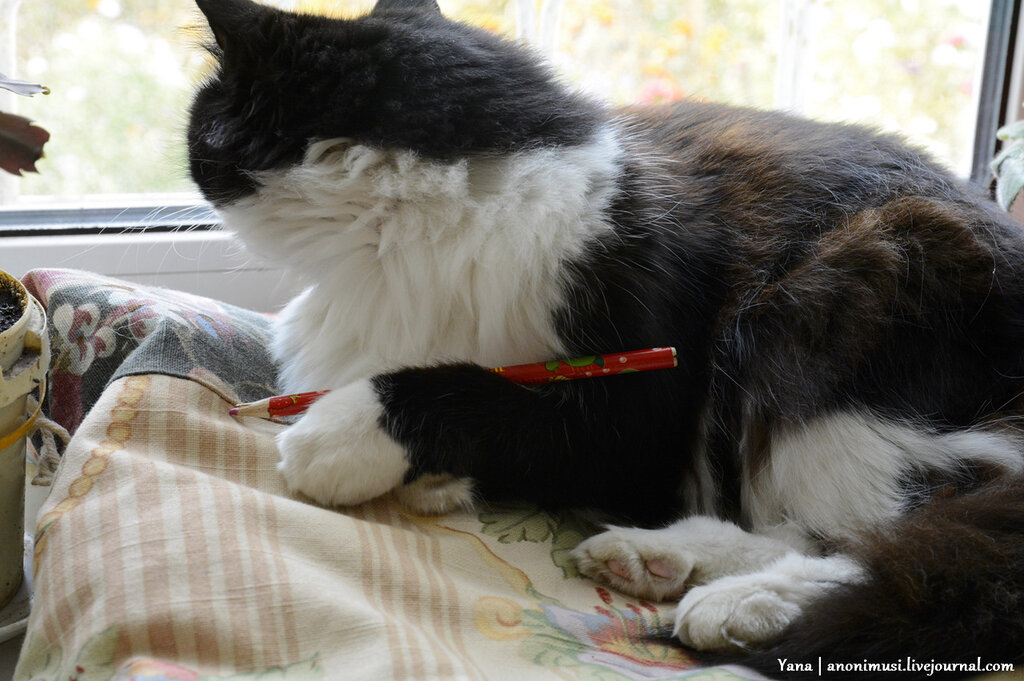 Кошка и курсовая работа по истории стиля
