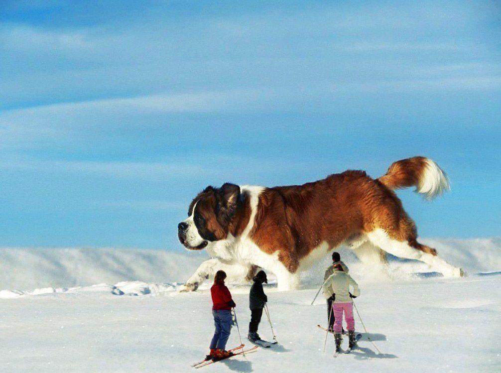 Животные-гиганты