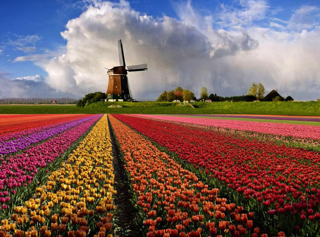 109 голландия.jpg