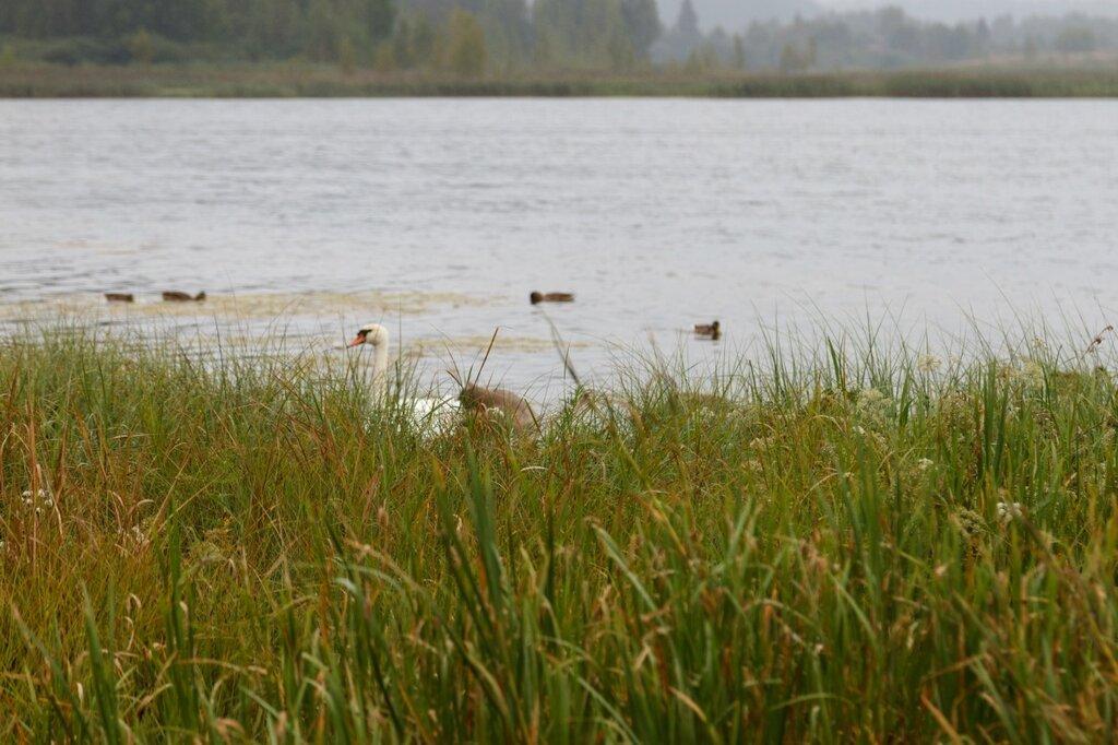 Городищенское озеро, Изборск