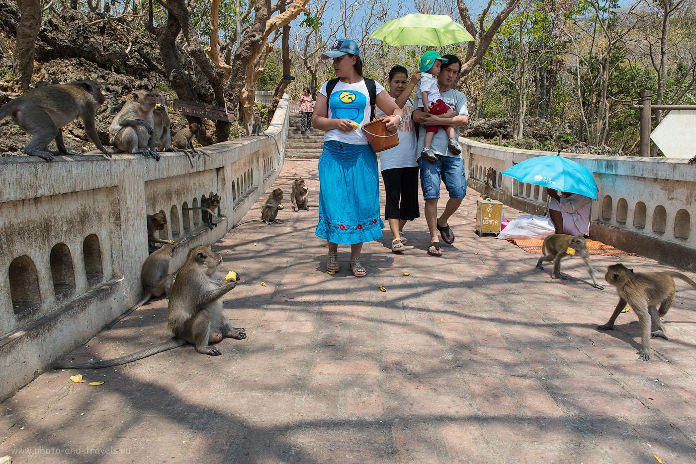 Фотография 14. Экскурсии их Хуахин. Отдых в Таиланде. Путешествие на машине. Катя - тайский Мазай... (125, 24, 9.0, 1/100)
