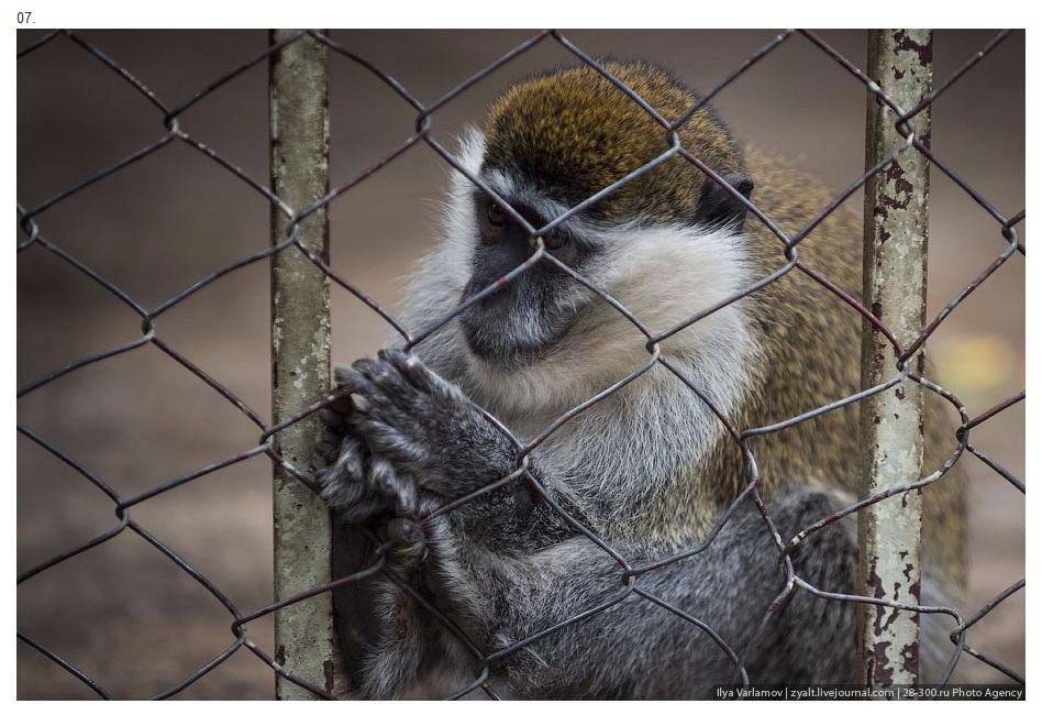 Эфиопия, Зоопарк Варламов