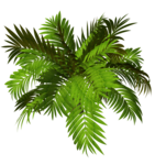 R11 - Garden Plant 2014 - 123.png