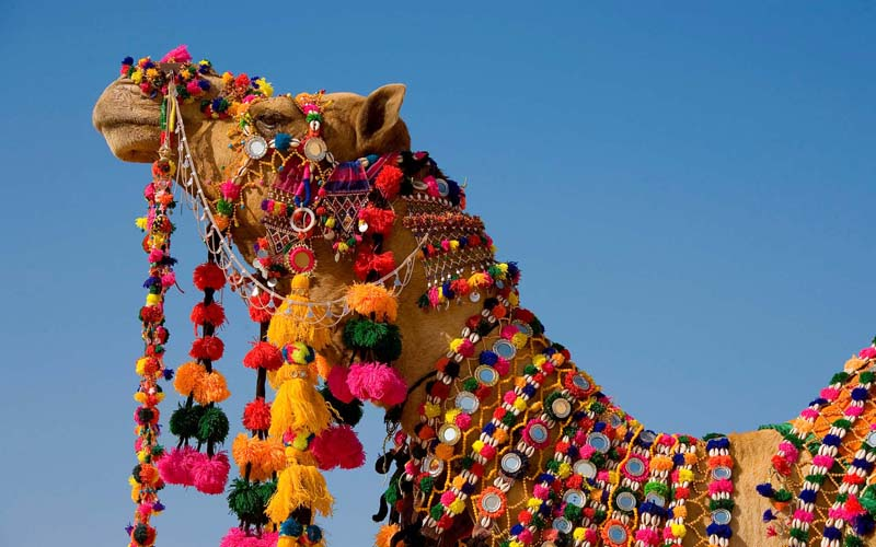 Животные Верблюды Фото Обои рабочий стол