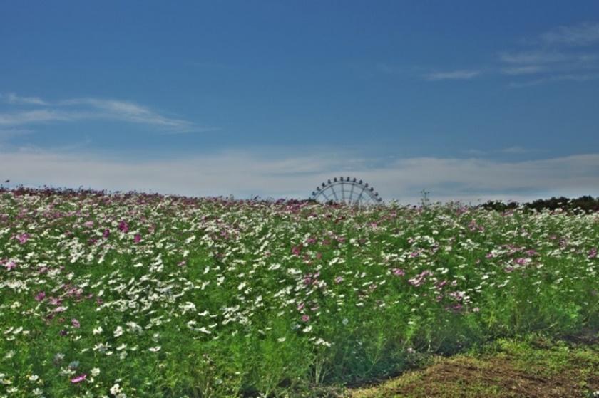 Живописный японский парк Хитати Кайхин 0 1422d7 1222a559 orig