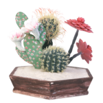 cactus (13).png