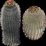 cactus (33).png