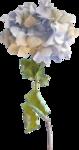Lilas_Hydrangeas-fragrance_elmt (15).png