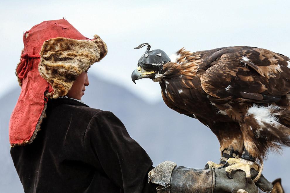 3. Величественный хищник. (Фото Batzaya Choijiljav):