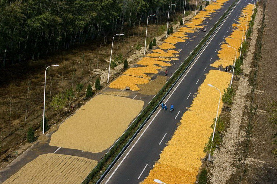 22. Китайцы сушат на трассе в окрестностях Пекина кукурузу.