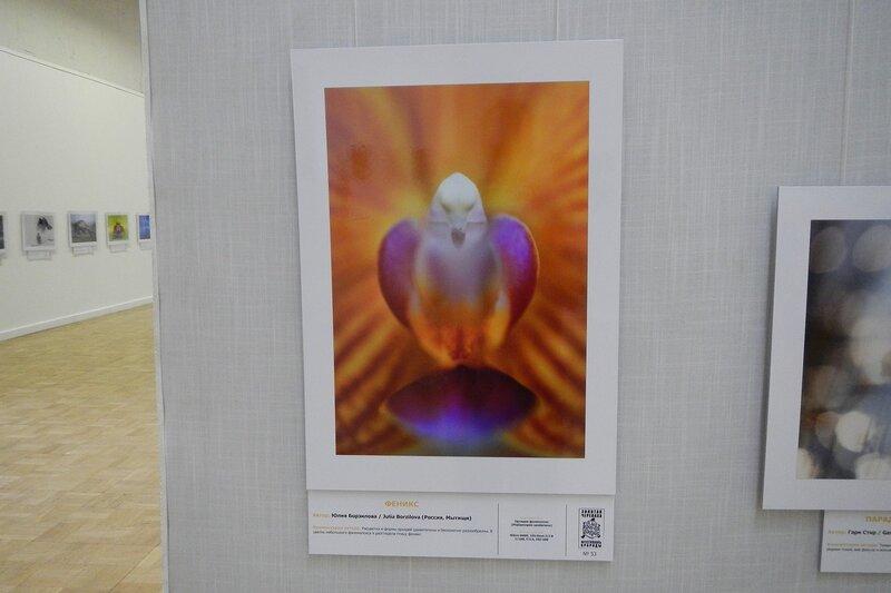 Феникс. Юлия Борзилова. Необычный цветок орхидеи в виде птицы. На фестивале дикой природы Золотая Черепаха