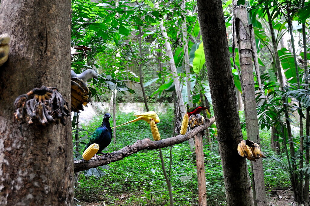 Парк птиц в зоопарке Чианг Мая