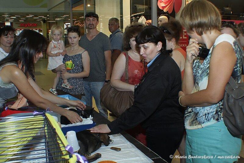 Добрые руки, Саратов, 16 августа 2014 года