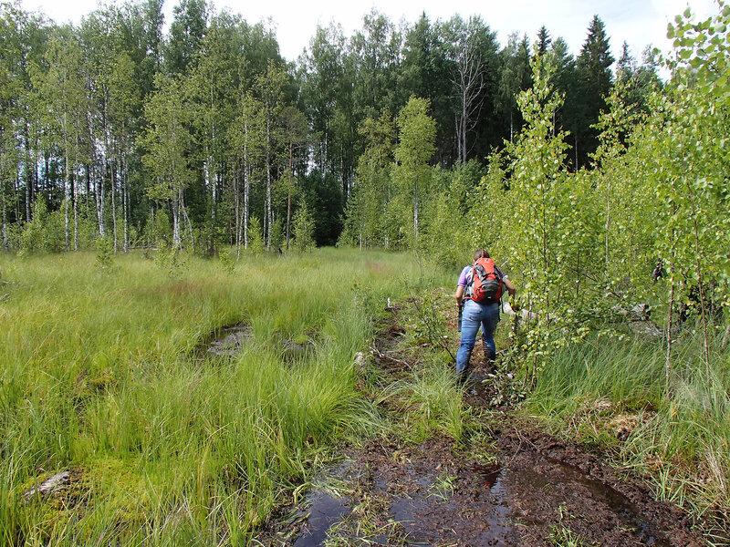 выход к мшинскому болоту