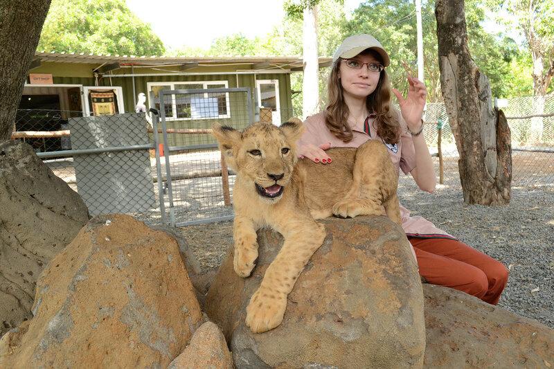 А когти у львеночка во-от та-акие - я вам говорю!