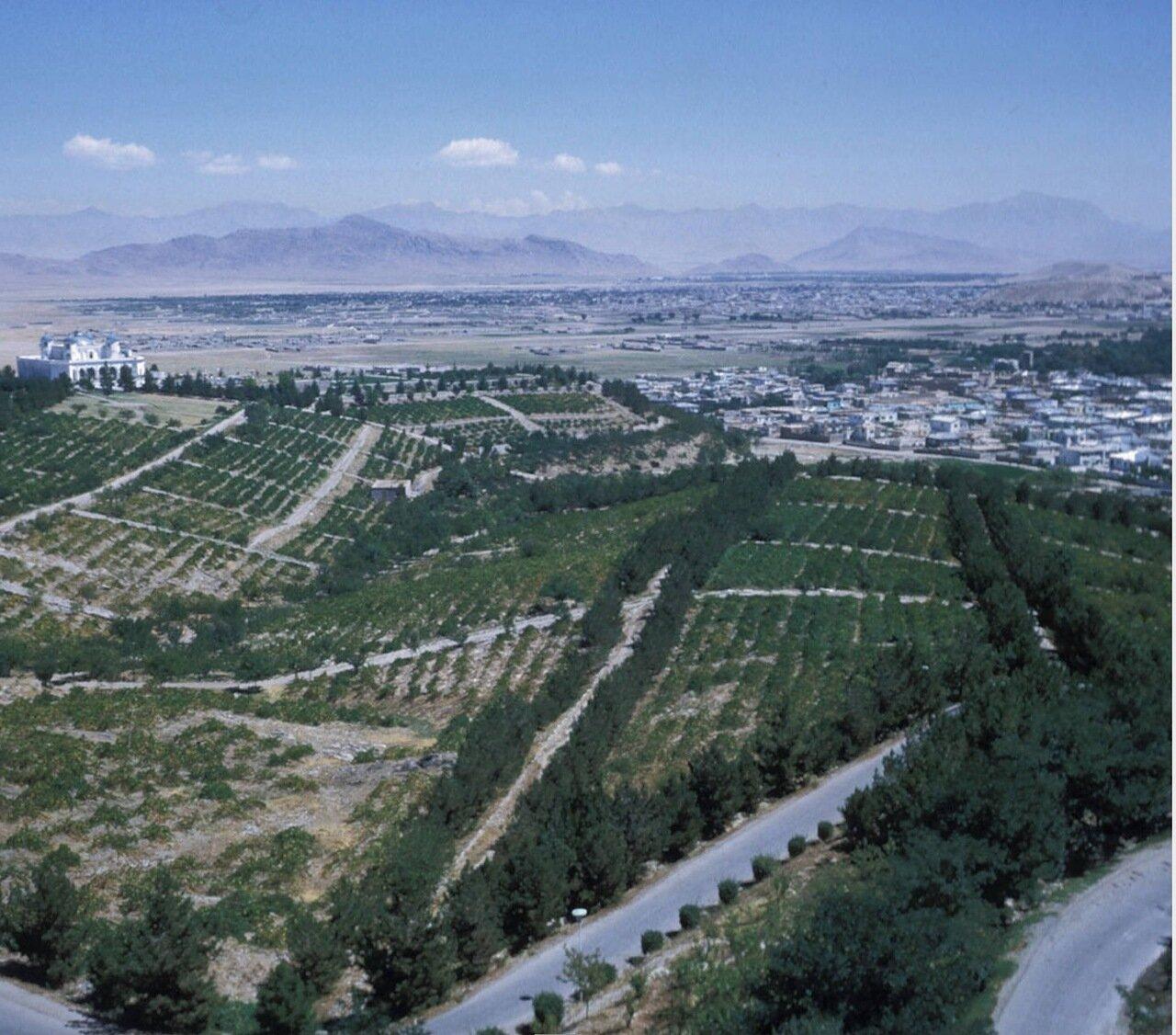 Аэрофотосъемка виноградников