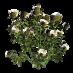 цветы (110).png