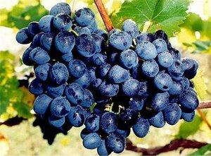 Очередной винзавод в Молдове на грани закрытия
