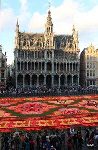 Фестиваль бегоний в Брюсселе.