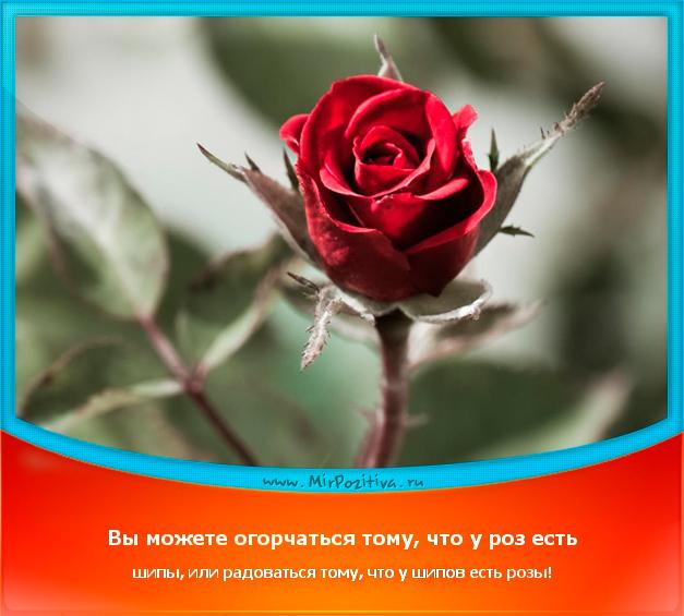 позитивчик дня: Вы можете огорчаться тому, что у роз есть шипы, или радоваться тому, что у шипов есть розы.