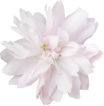 bee_floral_el12.png