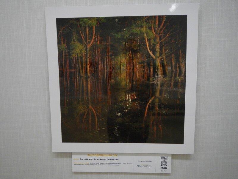 Заколдованный лес. Сергей Шляга (Белоруссия). На фестивале дикой природы Золотая Черепаха